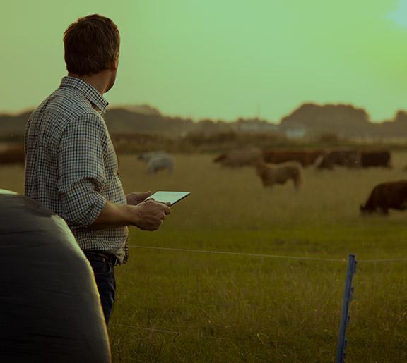 Sistemas Integrados de Produção Agropecuária (SIPAs)