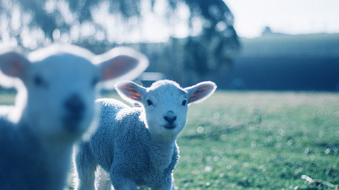 Mestrado Profissional em Saúde Animal Produção e Ambiente